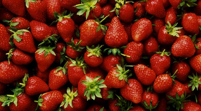 fresas-organicas